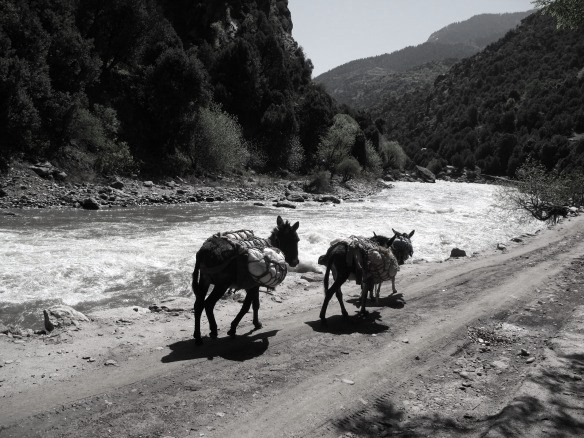 nuristan-donkeys-follow-the-kunar-river-south1